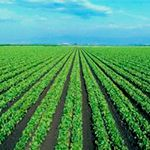 Молочная кислота в сельском хозяйстве