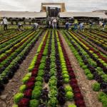 Ортофосфорная кислота в сельском хозяйстве